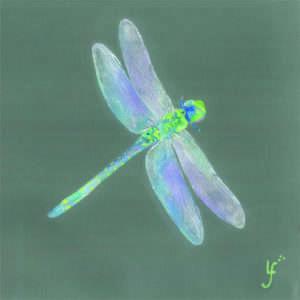 Follow Me Dragonfly Print